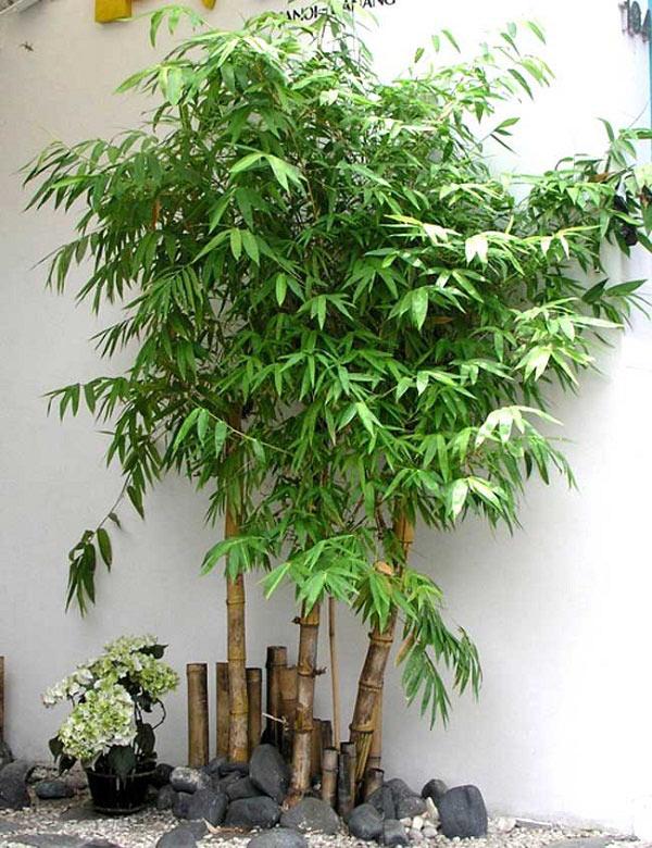 Cuối năm, trồng cây gì trước nhà để tài lộc